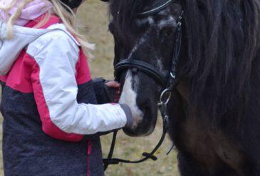 Ponys machen Mut!